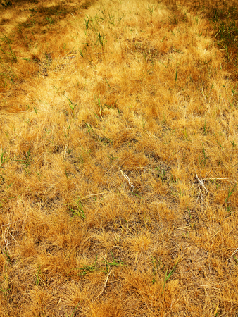 dried autumn grass in steppe as background