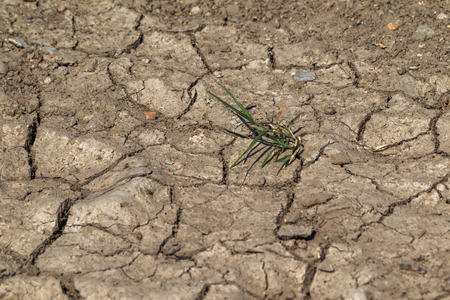 Earth land cracks with dust and rough dry surface texture, Earth's drought water shortage (Global Climate Change). The surface of drylands. Vegetation breaks through cracks in ground
