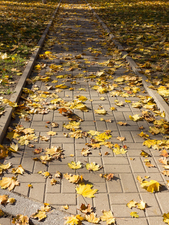 Creative background of yellow leaves on the sidewalk in perspective. Authentic bright autumn background for any of your projects.