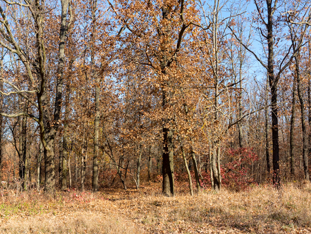 Colorful mixed deciduous forest.