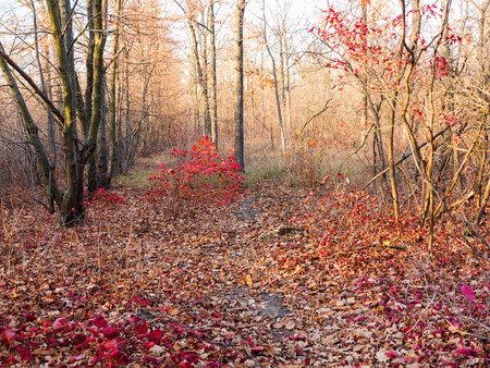 Colorful mixed deciduous forest. Autumn forest in the morning light. Beautiful nature background. Amazing romantic landscape with mysterious autumn forest.