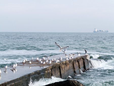 Gulls resting on the end of a breakwater or stone sea pier. Seascape at winter day. Stock Photo