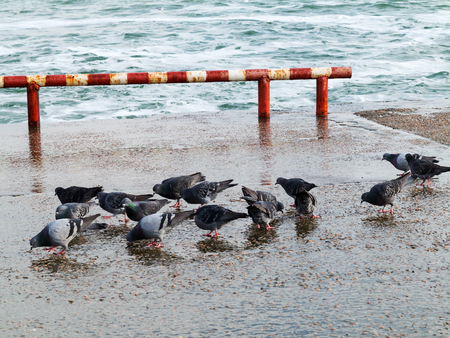 Pigeons on the waterfront of the ancient maritime city of Odessa