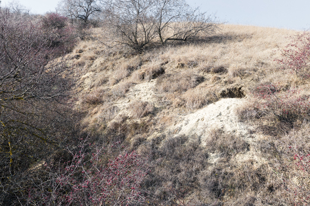 Fox holes. Colony of foxes on slopes of mountain hills. Big hole in land is wild animal. System of underground passages and holes. Traces of foxes in wild