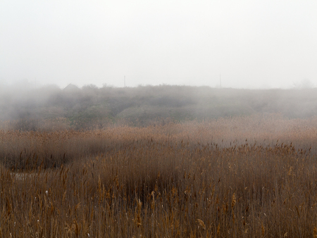 Beautiful rustic authentic landscape. Mist over the lake overgrown with reeds and grass Foto de archivo - 120763149