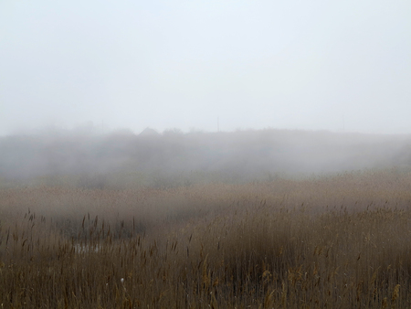 Beautiful rustic authentic landscape. Mist over the lake overgrown with reeds and grass Foto de archivo - 120763150