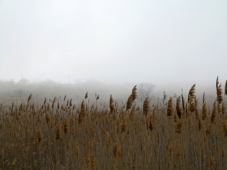 Beautiful rustic authentic landscape. Mist over the lake overgrown with reeds and grass Foto de archivo - 120763152