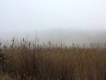 Beautiful rustic authentic landscape. Mist over the lake overgrown with reeds and grass Foto de archivo - 120763153