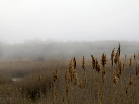 Beautiful rustic authentic landscape. Mist over the lake overgrown with reeds and grass Foto de archivo - 120724416