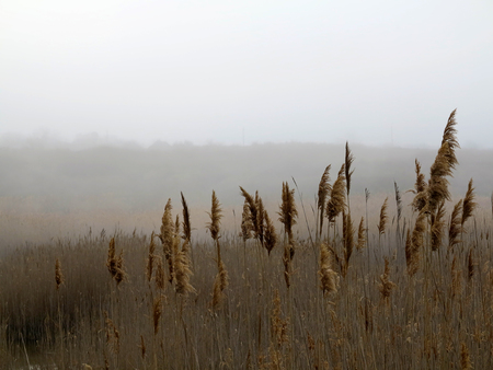 Beautiful rustic authentic landscape. Mist over the lake overgrown with reeds and grass Foto de archivo - 120724417