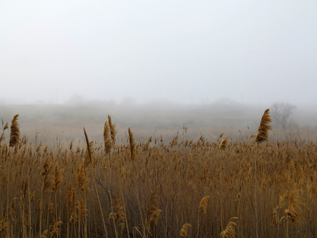 Beautiful rustic authentic landscape. Mist over the lake overgrown with reeds and grass