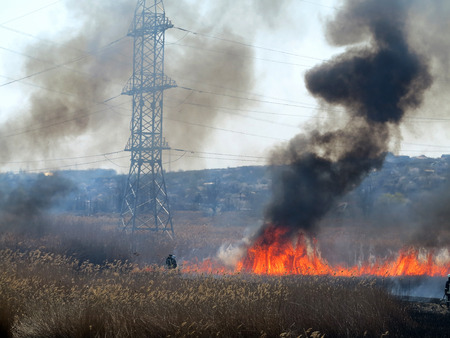 Fire, wildfire, conflagration, burning reeds and trees near the road under high-voltage wires