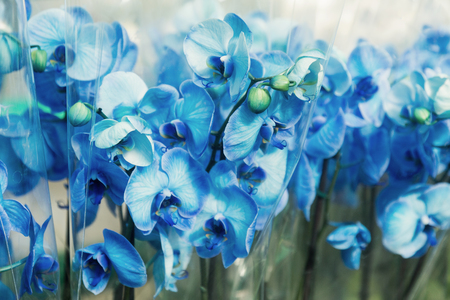 Beautiful blue delicate orchid flowers shot in soft light. Stock Photo
