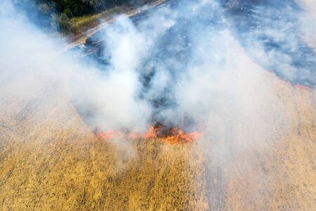 On the field after harvesting grain crops burning stubble and straw. Factors causing smoke in atmosphere and global warming. Smoke from burning of dry grass (drone image). Small animals are bending