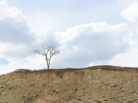Bird colonies. Canyon wall slice with bird nests Golden bee-eater. Birds do not like loneliness and nest in colonies they build small caves quite close to each other in one steep wall.