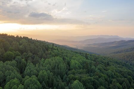 Beautiful landscape coniferous forest on the peaks of the Rhodope Mountains, Bulgaria. Travel and vacation concept