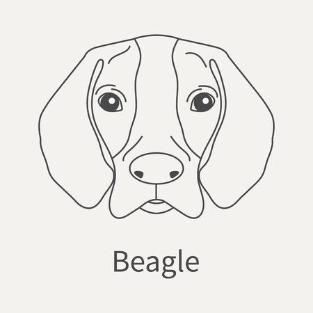 Beagle. Head dog Beagle in a linear style. Graphics outline element for your design. Vector illustration.