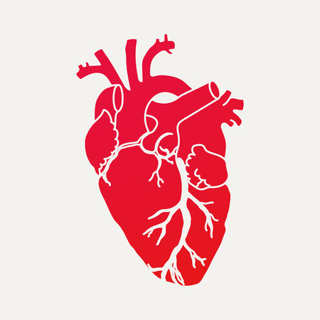 Anatomical human heart - red silhouette isolated on white background. Hand drawn sketch. Vector illustration