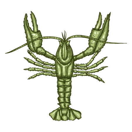 Colored green crayfish isolated on white background. Hand drawn sketch in vintage engraving style. Vector illustration of Arthropod. Water Zodiac Sign. Tattoo of a crustacean