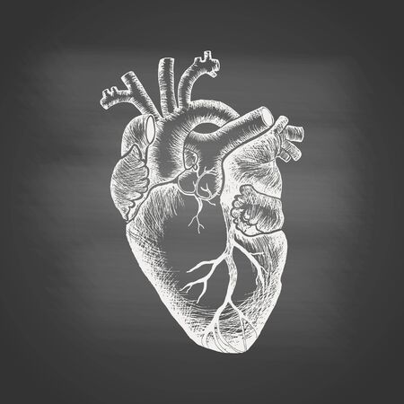 Anatomical human heart - chalk drawing on the blackboard. Hand drawn sketch in vintage engraving style. Vector illustration