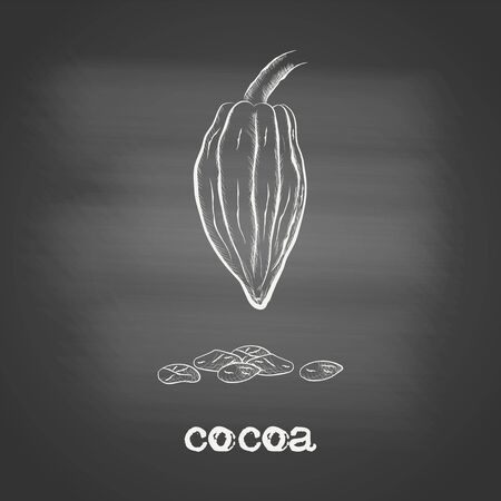Whole fruit chocolate tree with cocoa beans - Theobroma cacao - chalk drawing on the blackboard. Hand drawn sketch in vintage engraving style. Botanical vector illustration 矢量图像