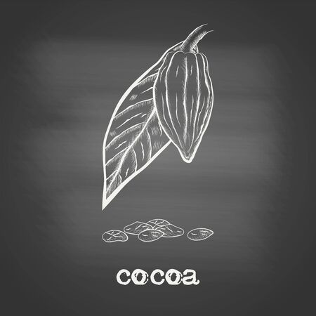 Whole fruit chocolate tree with cocoa beans and leaf - Theobroma cacao - chalk drawing on the blackboard. Hand drawn sketch in vintage engraving style. Botanical vector illustration 矢量图像