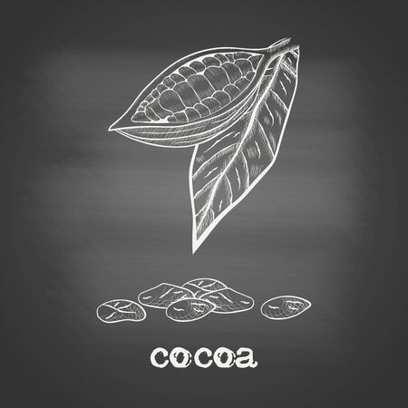 Fruit chocolate tree in a cut with cocoa beans and leaf - Theobroma cacao - chalk drawing on the blackboard. Hand drawn sketch in vintage engraving style. Botanical vector illustration 矢量图像