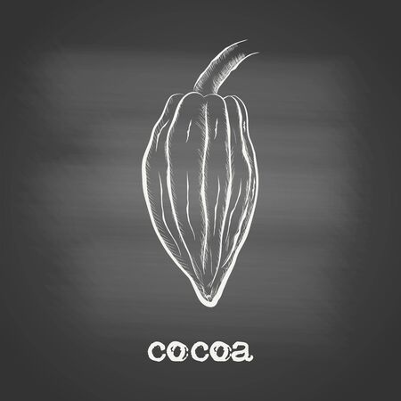 Whole fruit chocolate tree - Theobroma cacao - chalk drawing on the blackboard. Hand drawn sketch in vintage engraving style. Botanical vector illustration 矢量图像