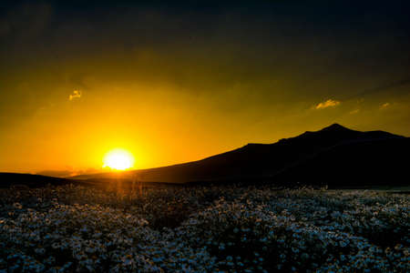 Beautiful sunset over a field of chamomile Stock fotó