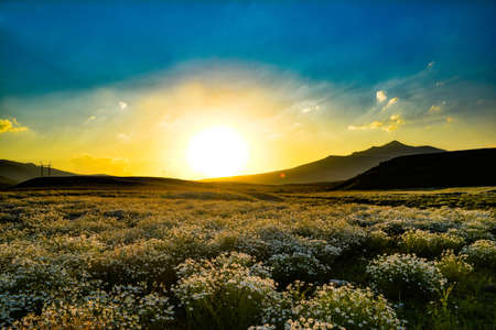 Fantastic sunset over a field of chamomile Stock fotó