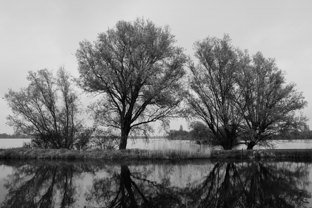 plassen: Three trees at the lake shore with water reflections at Langeraarsche Plassen, Netherlands Stock Photo