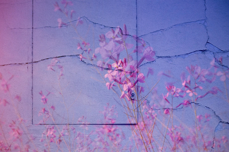 Pink lilac background surface, photomontage of wall, hatch and flowers.