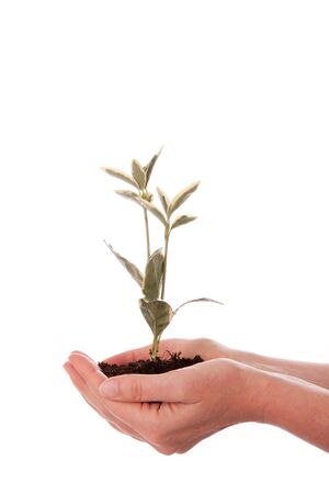 A young woman is holding a plant and flower soil in her hands Stock Photo - 11012393