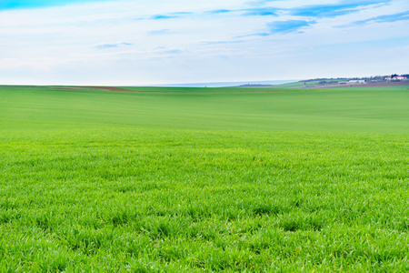 Young green wheat field on a nice spring day Stock fotó