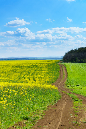 Bright sunny spring day with large clouds over Cultivated field in countryside