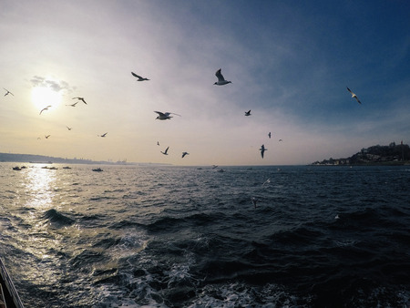 Sea gulls fly behind a ship in blue sky 写真素材