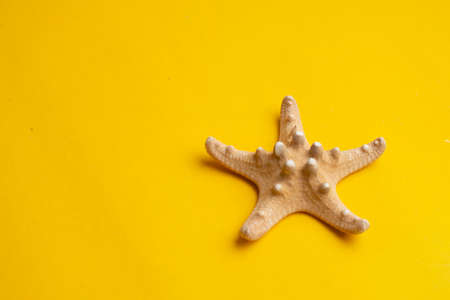 Composition of exotic sea shells on a yellow background. Summer concept. Copyspace for text.