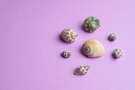 Composition of exotic sea shells on a violet background. Summer concept. Copyspace for text