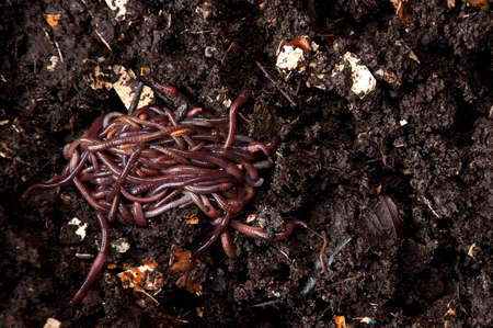 Earthworms on the ground Stock Photo