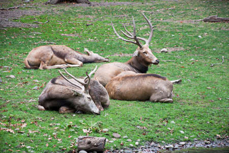 African deers in zoo