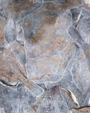 Fresh headless flounder for sale, close-up
