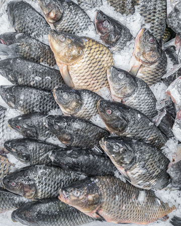 Fresh carp fish on ice for sale, close-up
