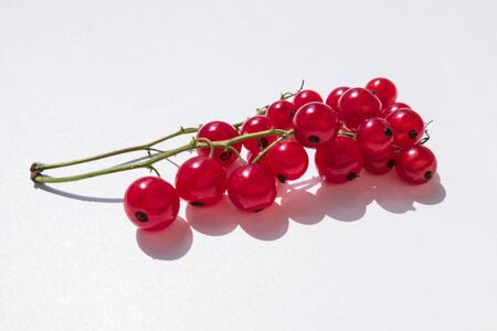 Close-up of redcurrant sprigs on white background