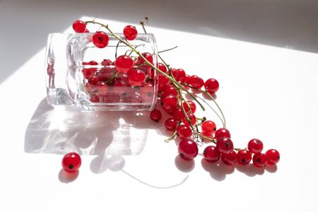 Small glass fell down, full of fresh redcurrant sprigs. Red currant spilled out from glass. Light and shadows from sunlight on white background