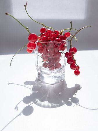 Freshly picked red currant in small glass. Redcurrant sprigs hanging from edges of glass. Light and shadows from sunlight on white background 版權商用圖片
