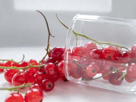 Close-up of small glass with redcurrant sprigs on white background