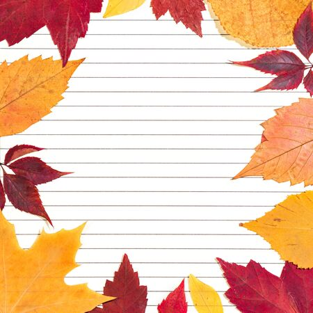 Close-up of clean paper sheet in a lined surrounded by autumn leaves. Top view, space for text