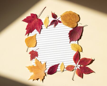 Clean paper sheet in a lined surrounded by autumn leaves. Bright sunlight and shadows at edges of frame. Beige background, top view, copy space