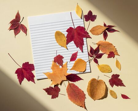 Clean paper sheet in a lined with autumn leaves. Bright sunlight and shadows at edges of frame. Beige background, flat lay, copy space