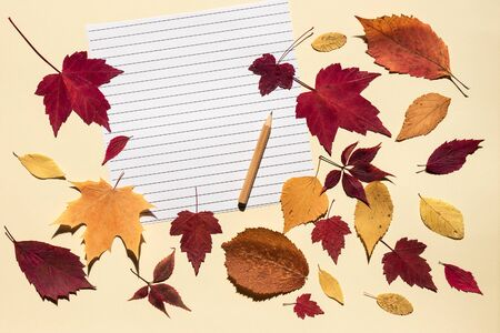 Empty lined page with pencil and colorful autumn leaves. Concept of back to school. Bright sunlight, beige background, flat lay, copy space Banque d'images